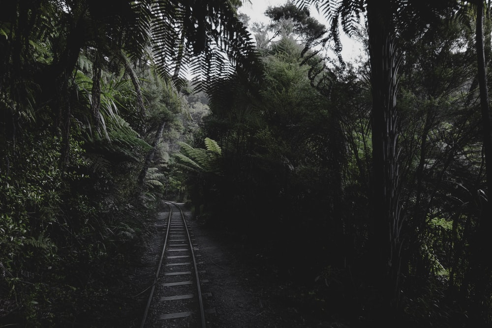 photo of railroad toward the forest