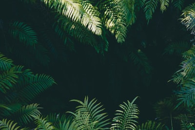 green linear leafed plants jungle zoom background