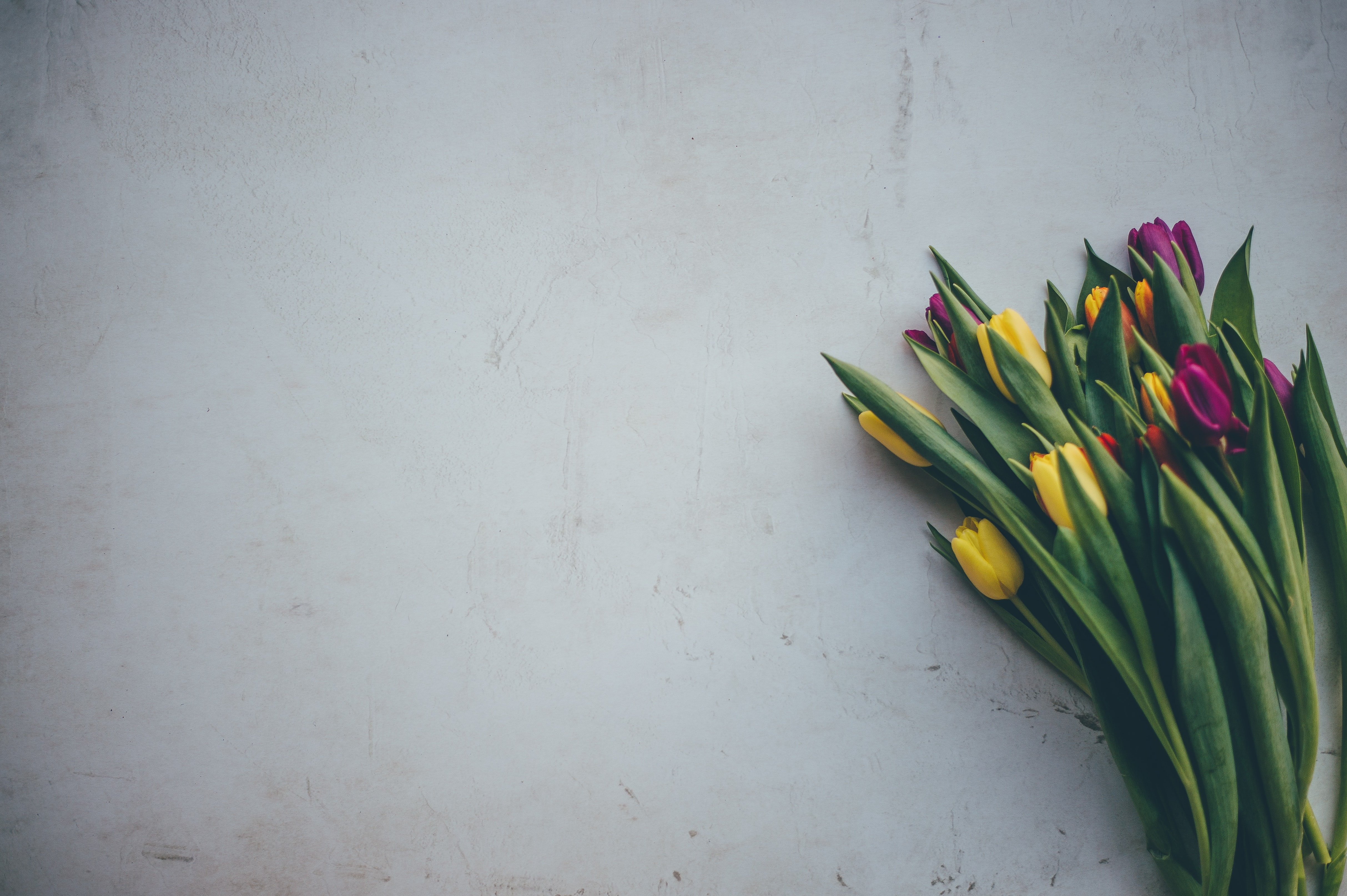 yellow and pink tulip flowers on white surface