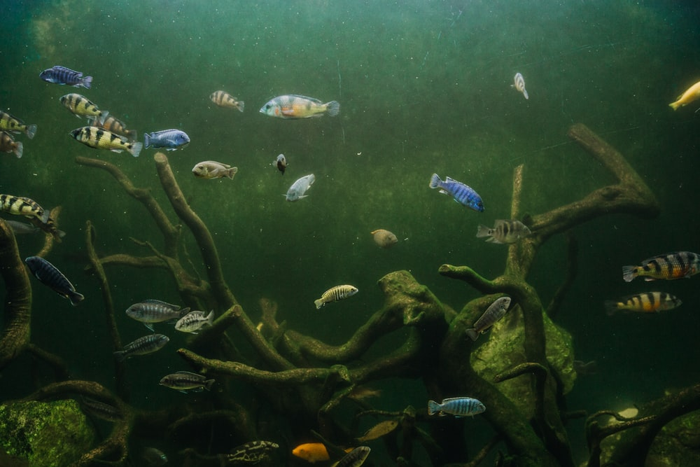 school of fish in body of water