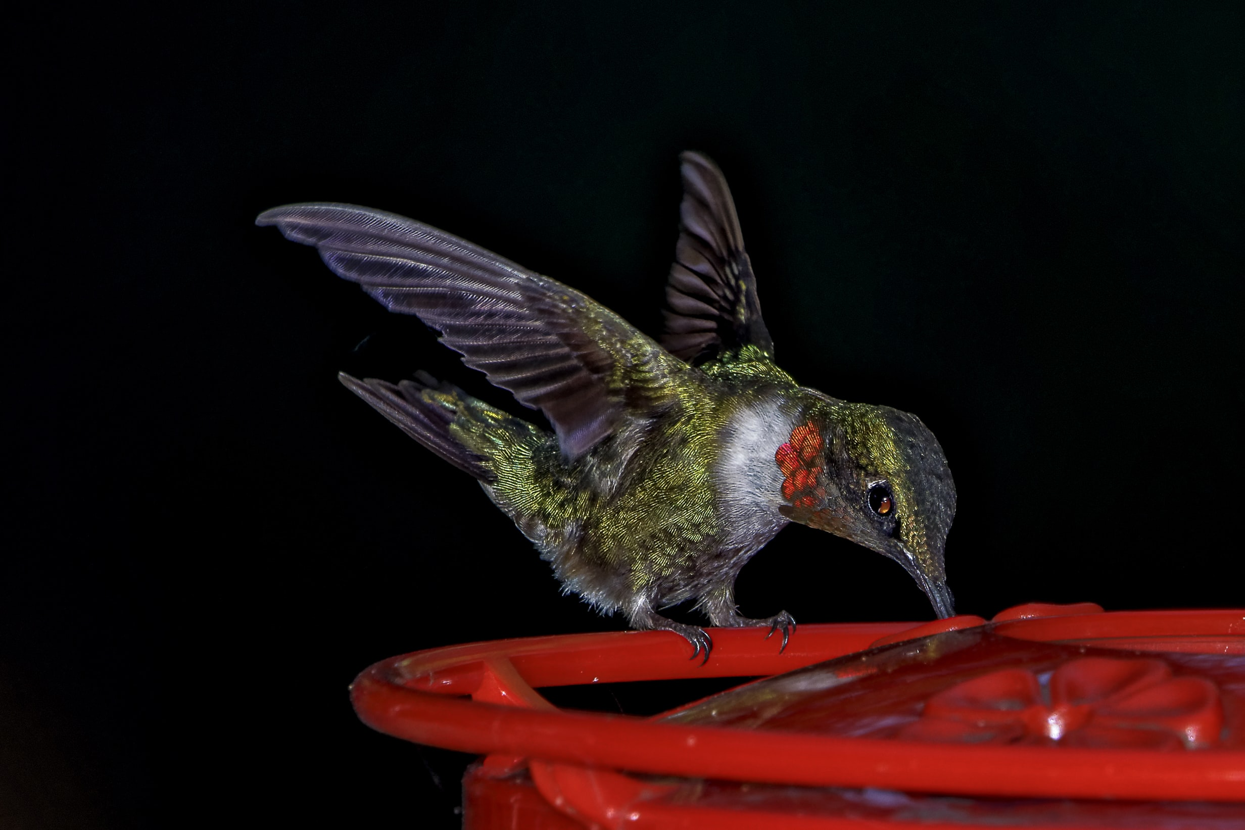 green and brown hummingbird on red plastic