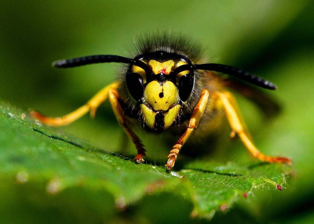 micro photography of yellow and black bee on green leaf