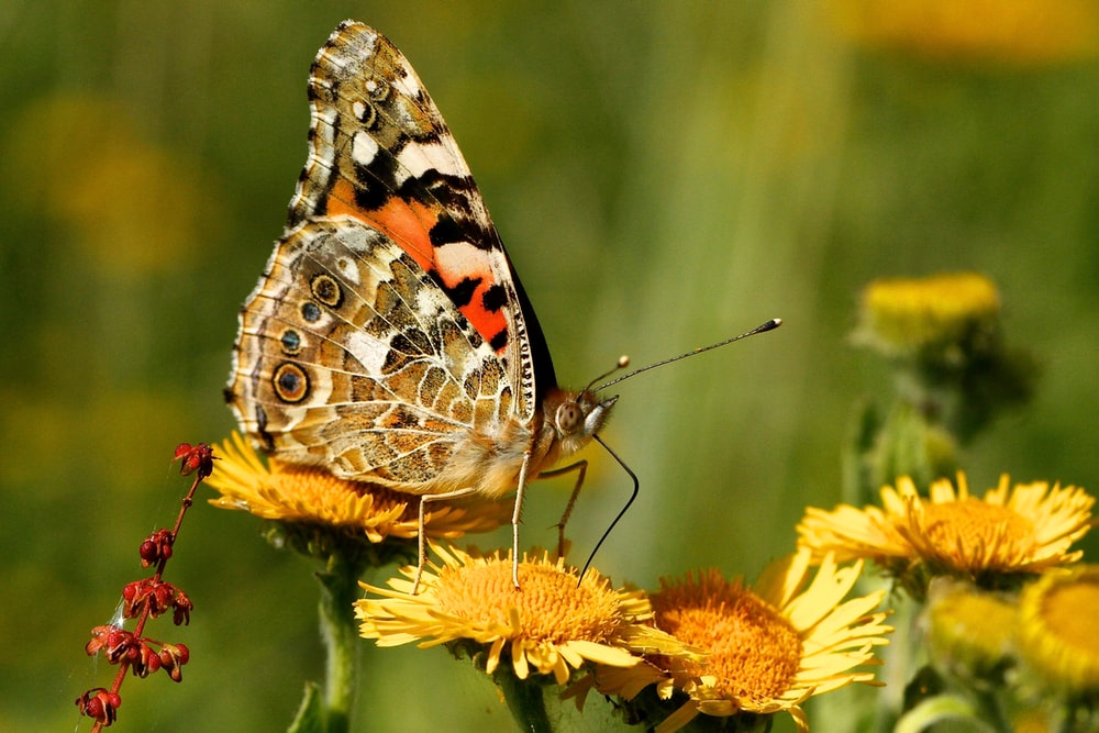 closeup photography of moth perched on flower