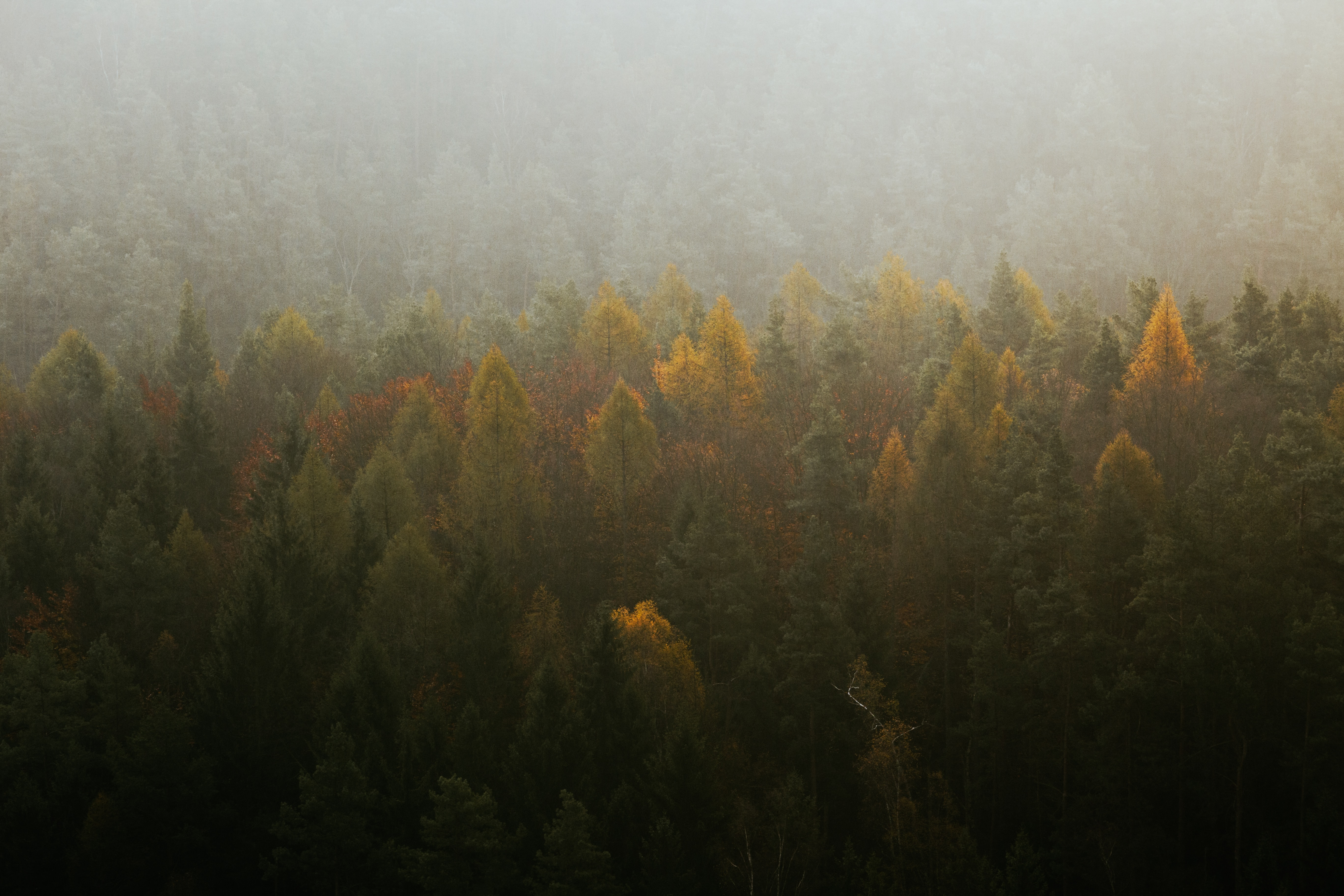 aerial view of green and yellow trees
