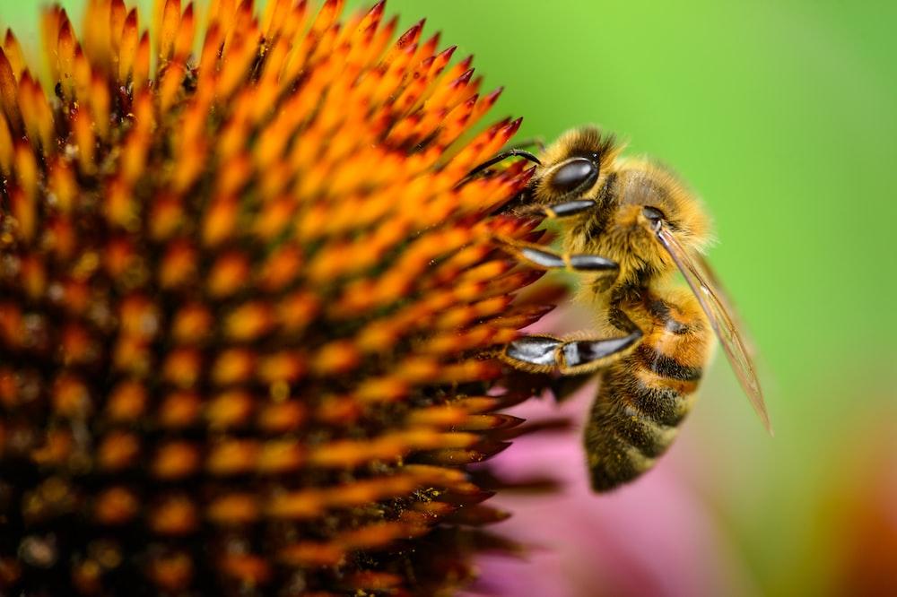 macro shot photo of bee on flower