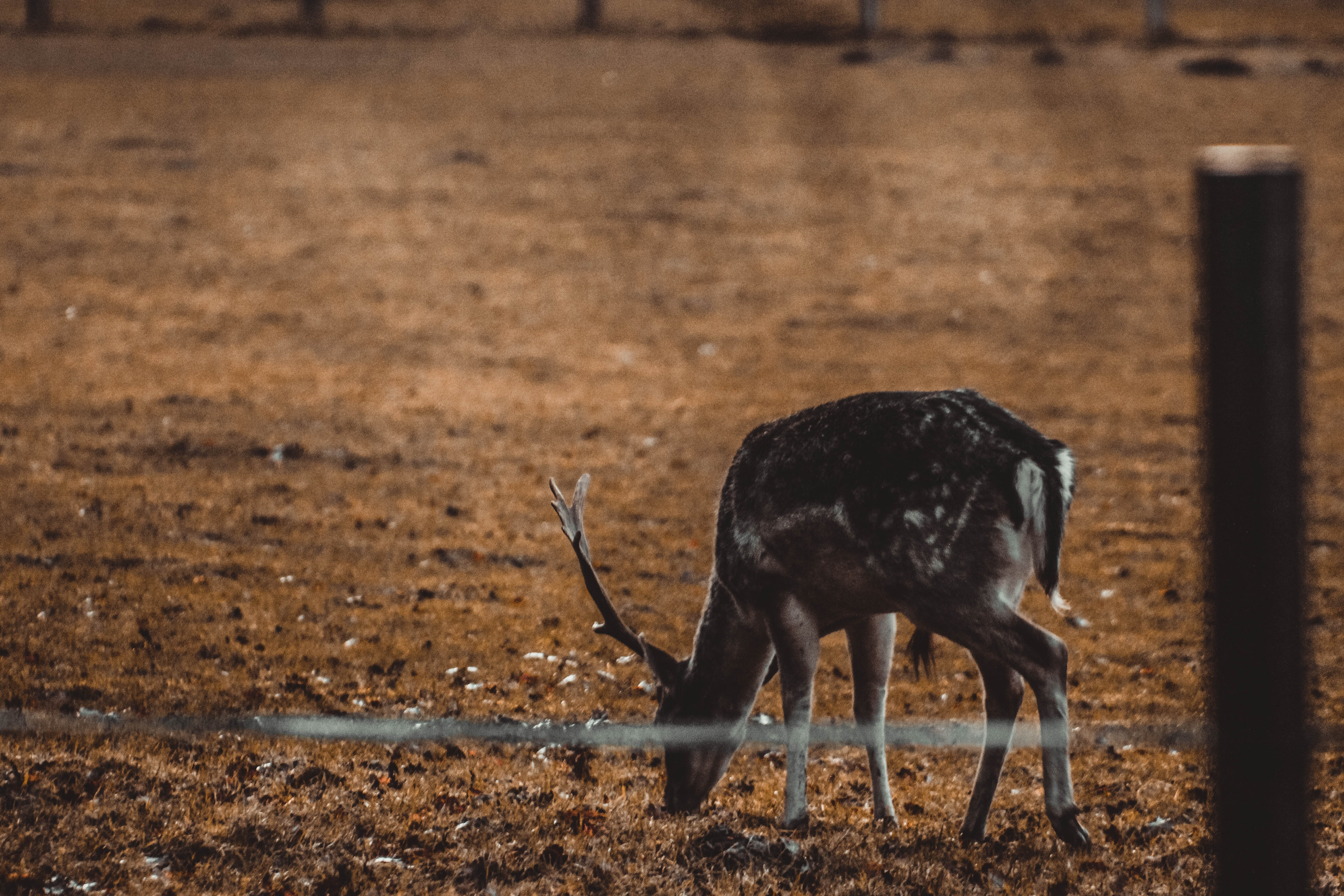deer standing on the ground