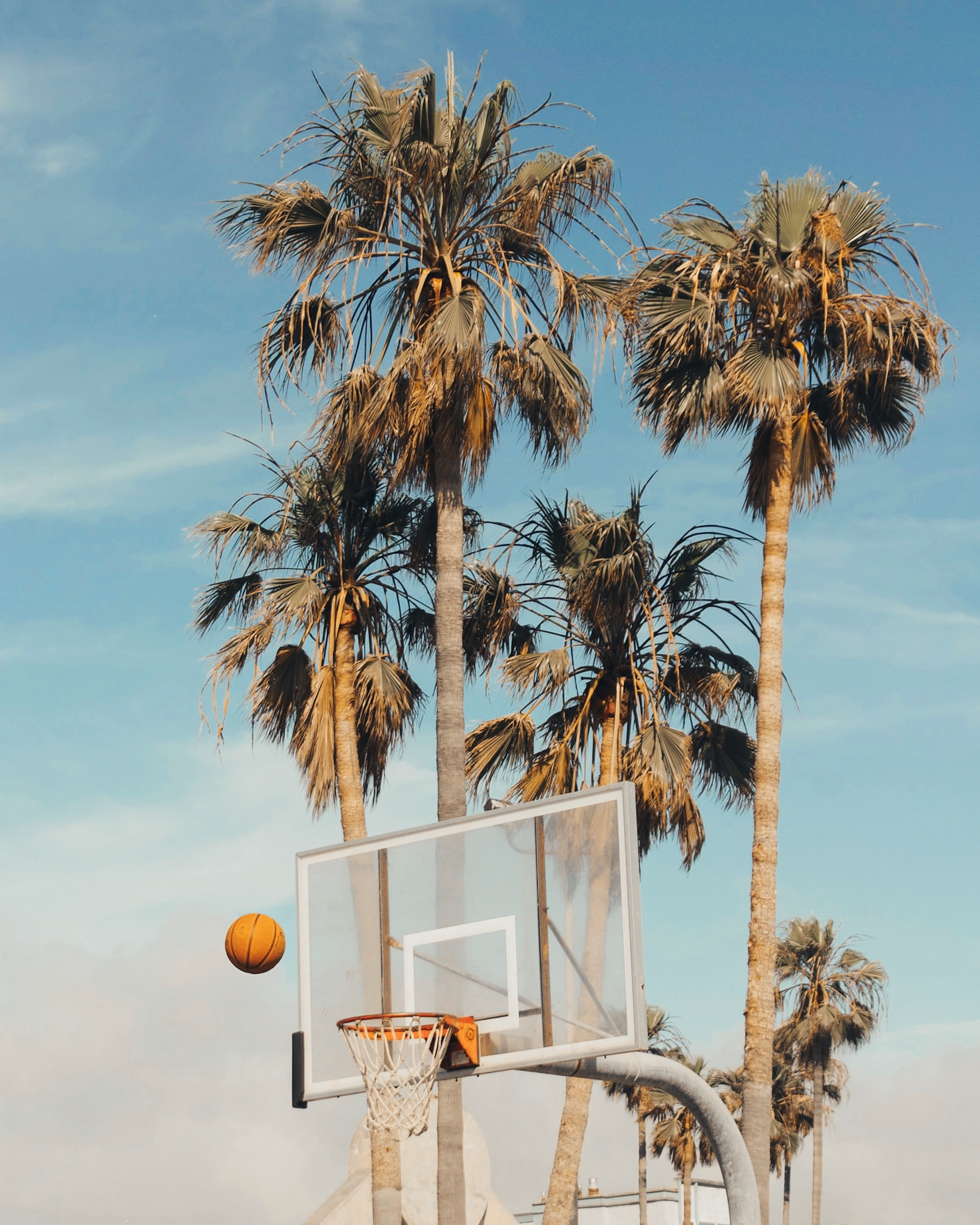 white and gray basketball system beside coconut trees