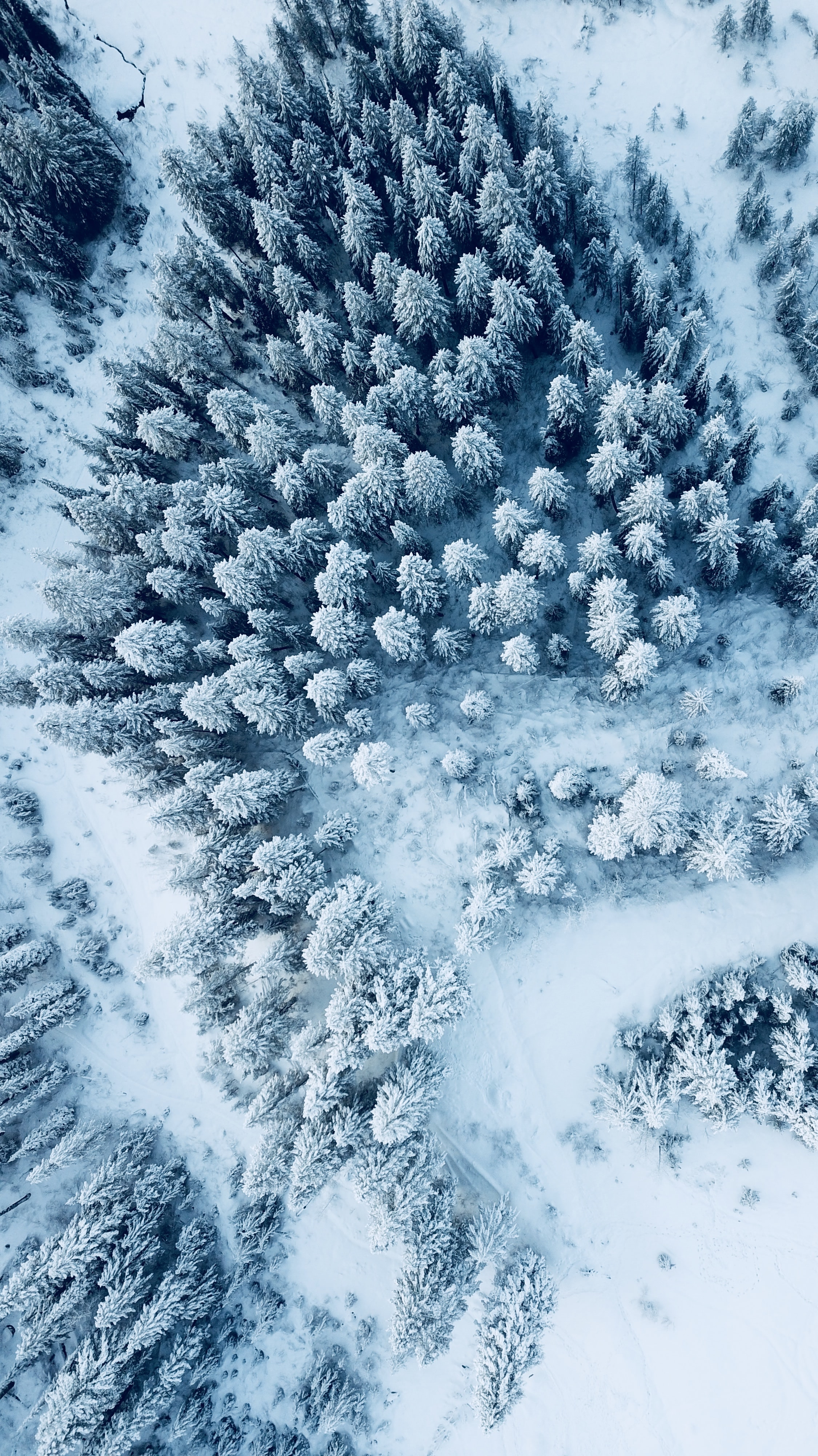 aerial photography of snow capped trees