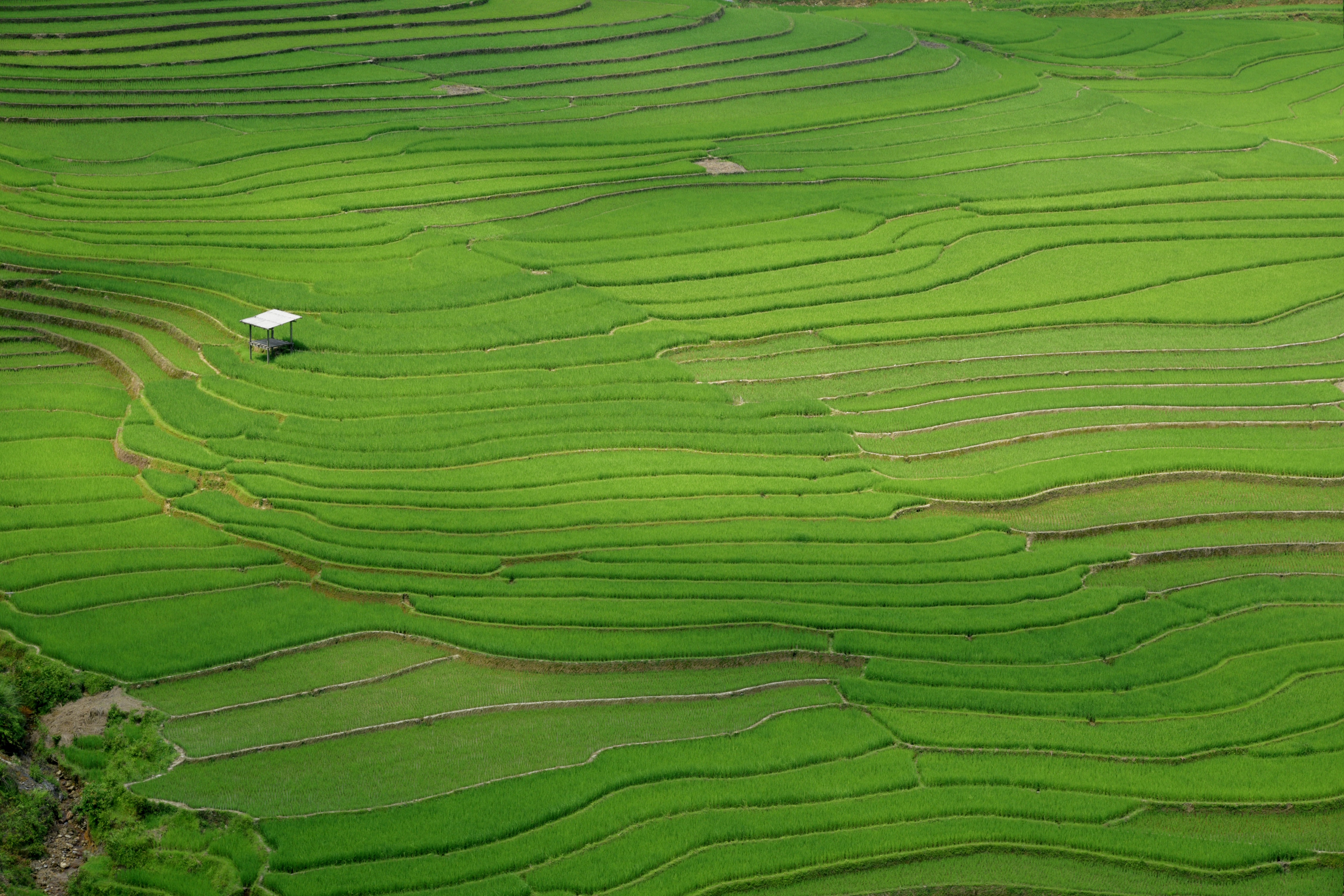 shed in the middle of the rice fields