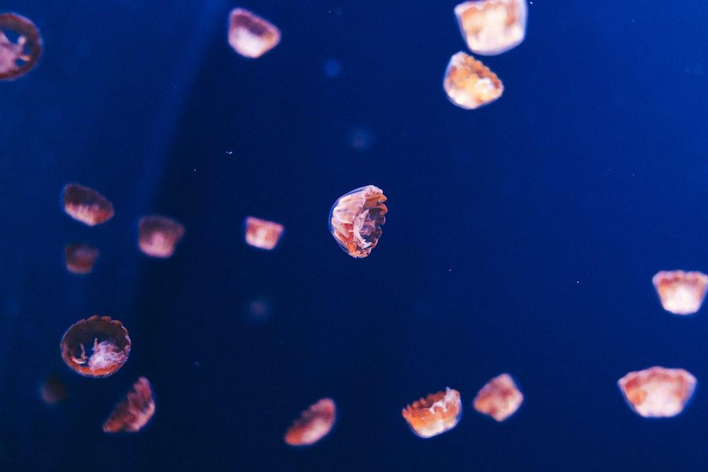 group of jellyfish digital wallpaper
