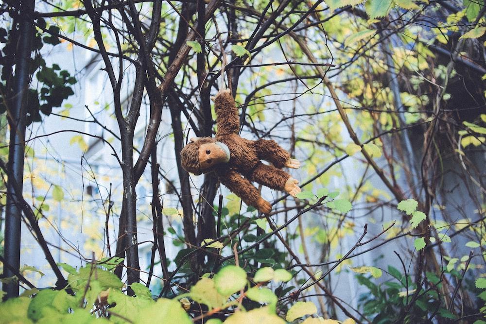 brown monkey plush toy hanged on tree branch