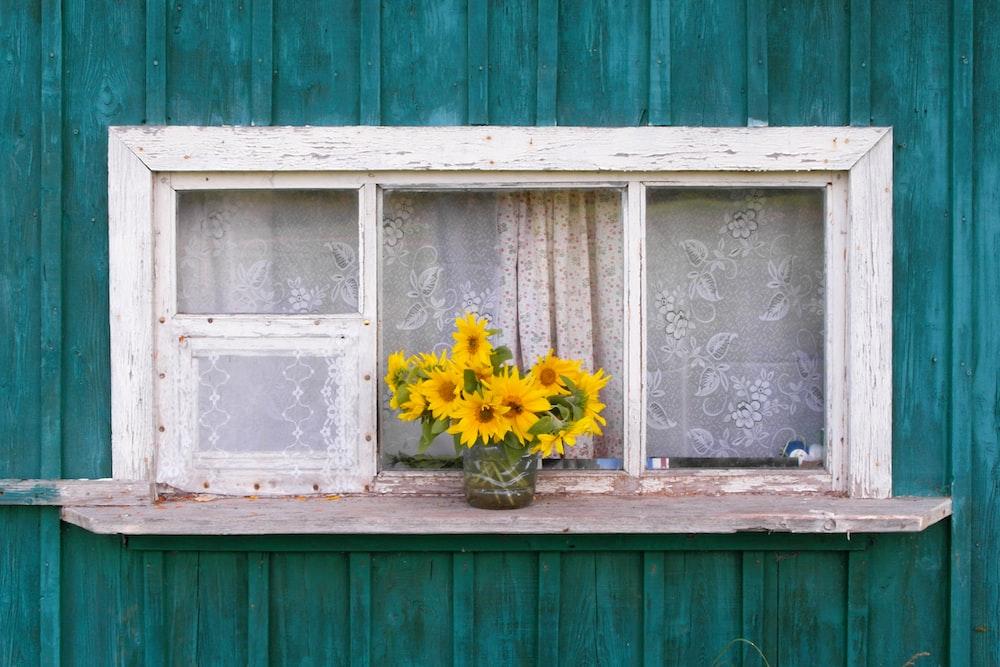 yellow sunflowers on window sill
