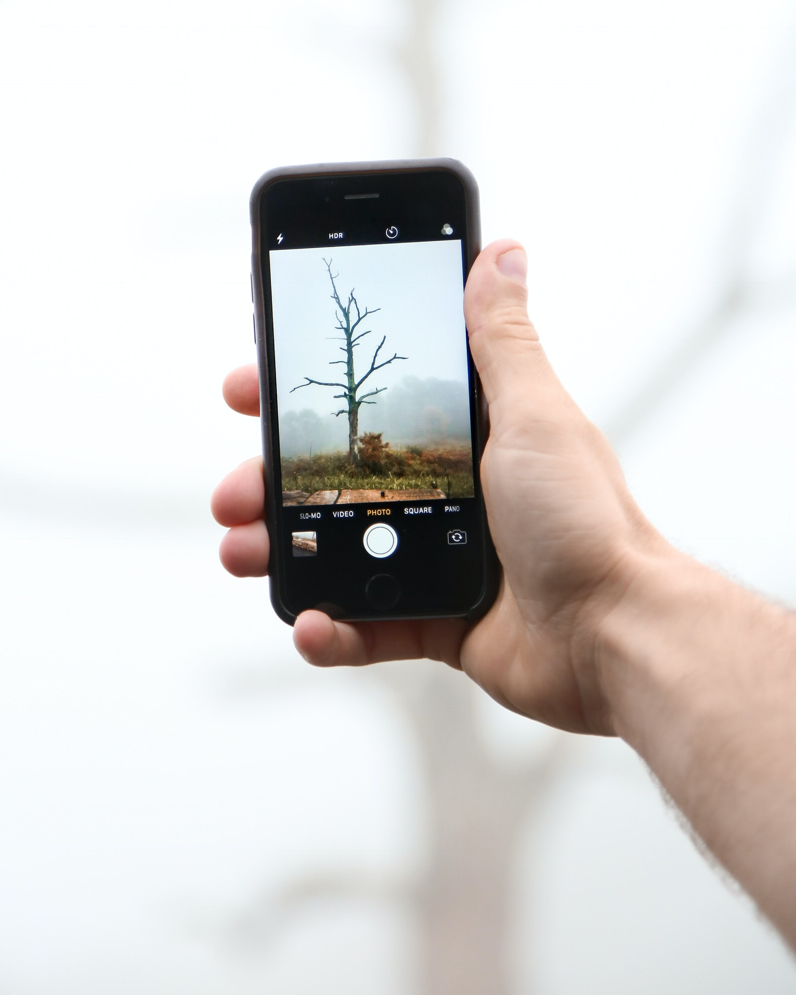 person taking photo of bare tree