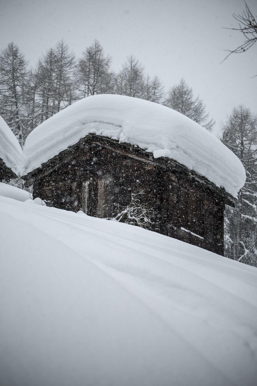 photo of snow coated house near trees