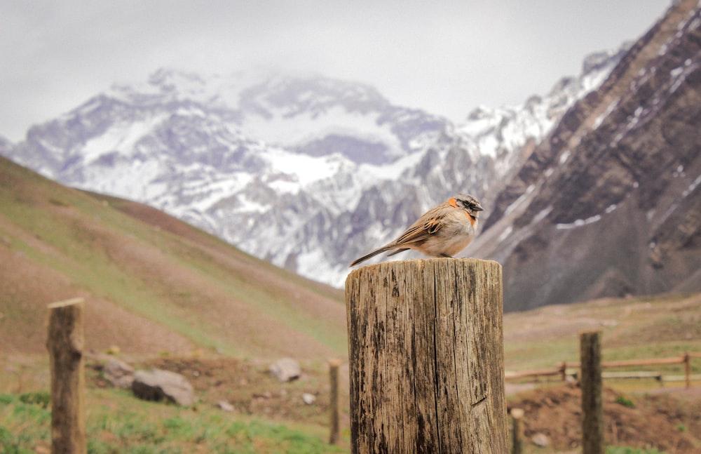 brown bird on top of log