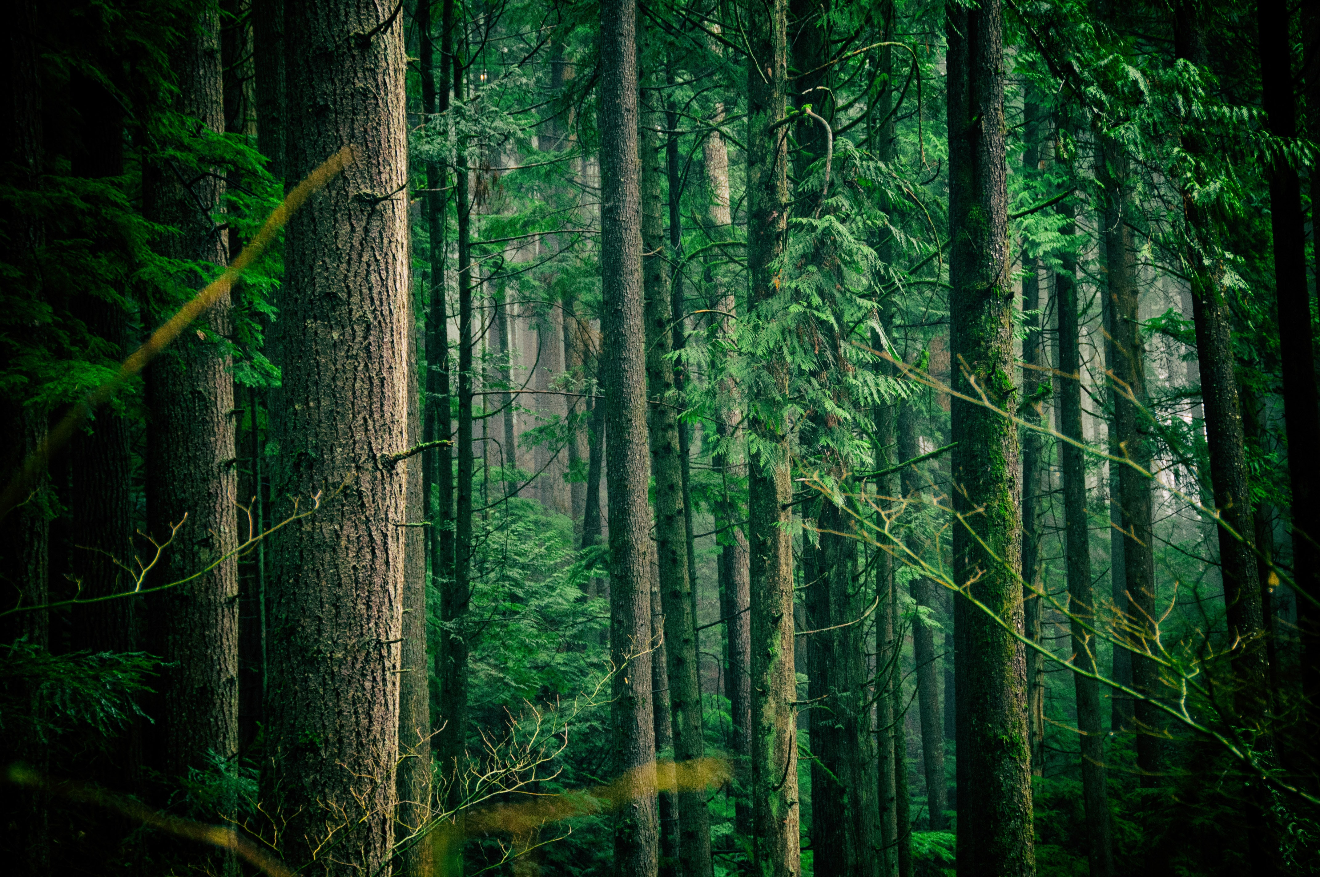 green leafed trees middle of forest during daytime