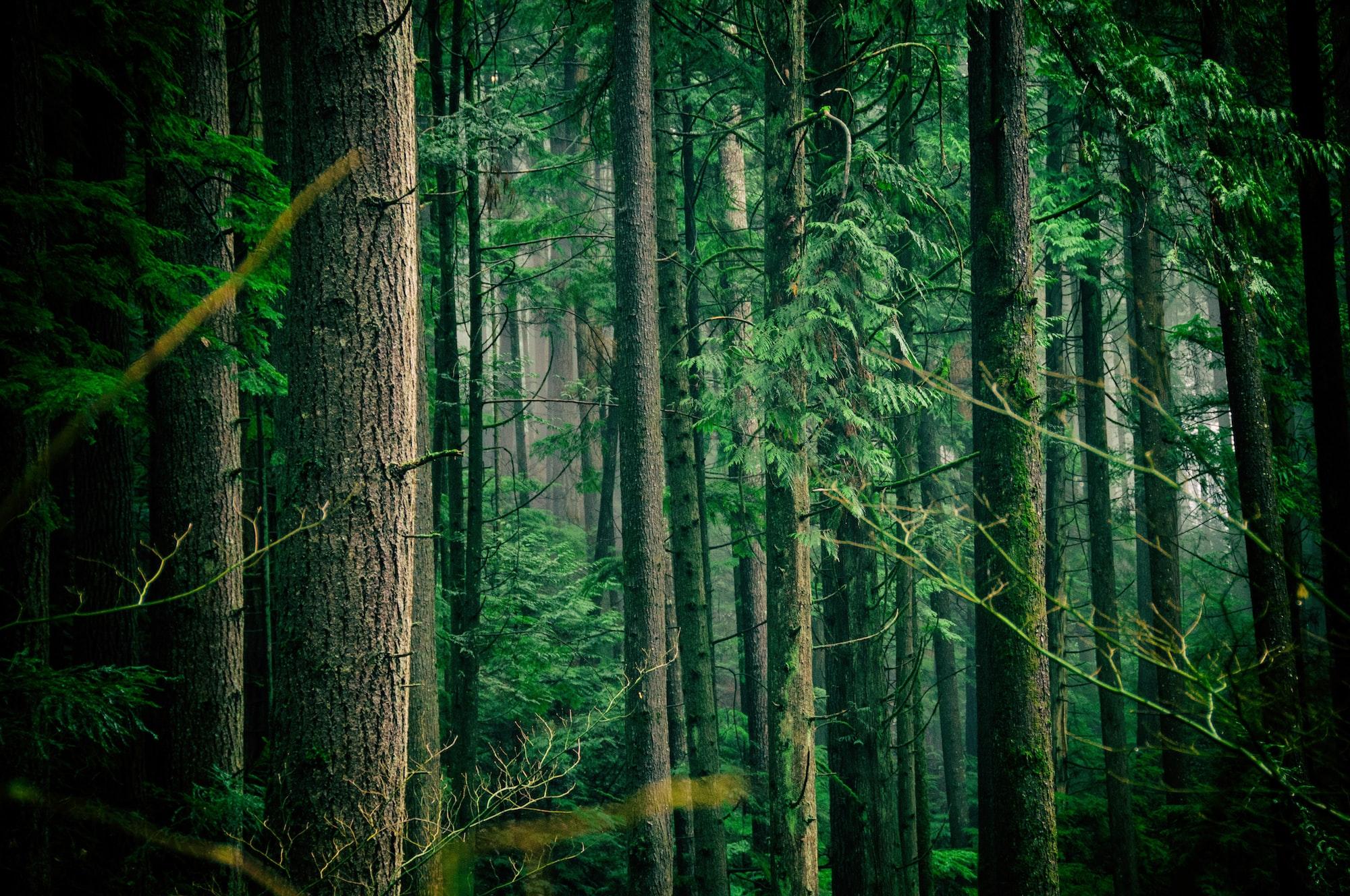 Hitzewelle 2020: Sind europäische Wälder gerüstet, sie zu überstehen?