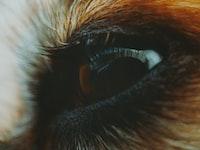 brown animal left eye