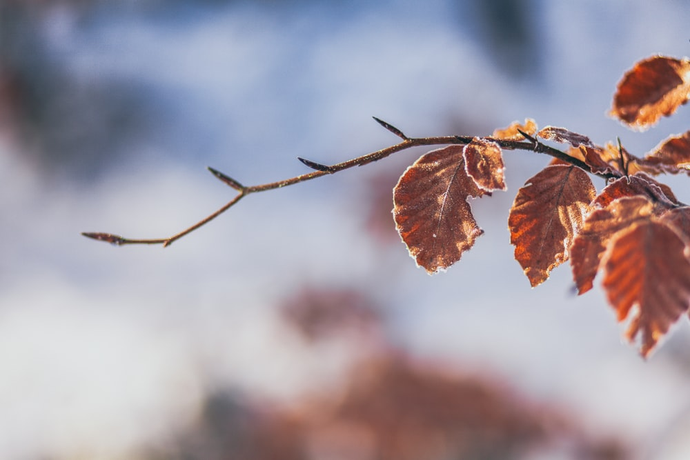tilt shift lens photography of brown leaf