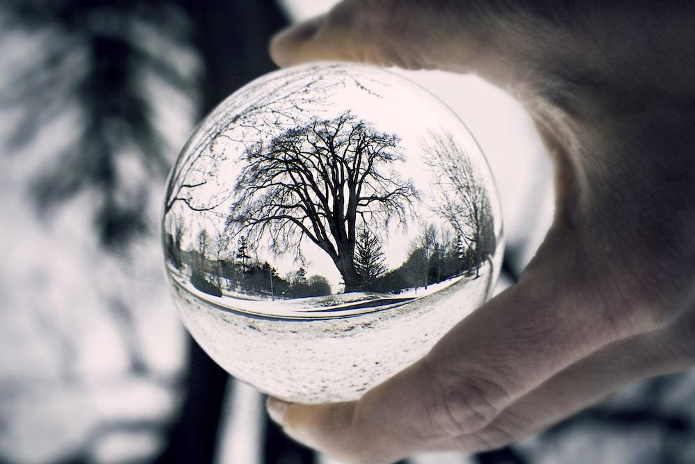 bare tree through clear glass ball