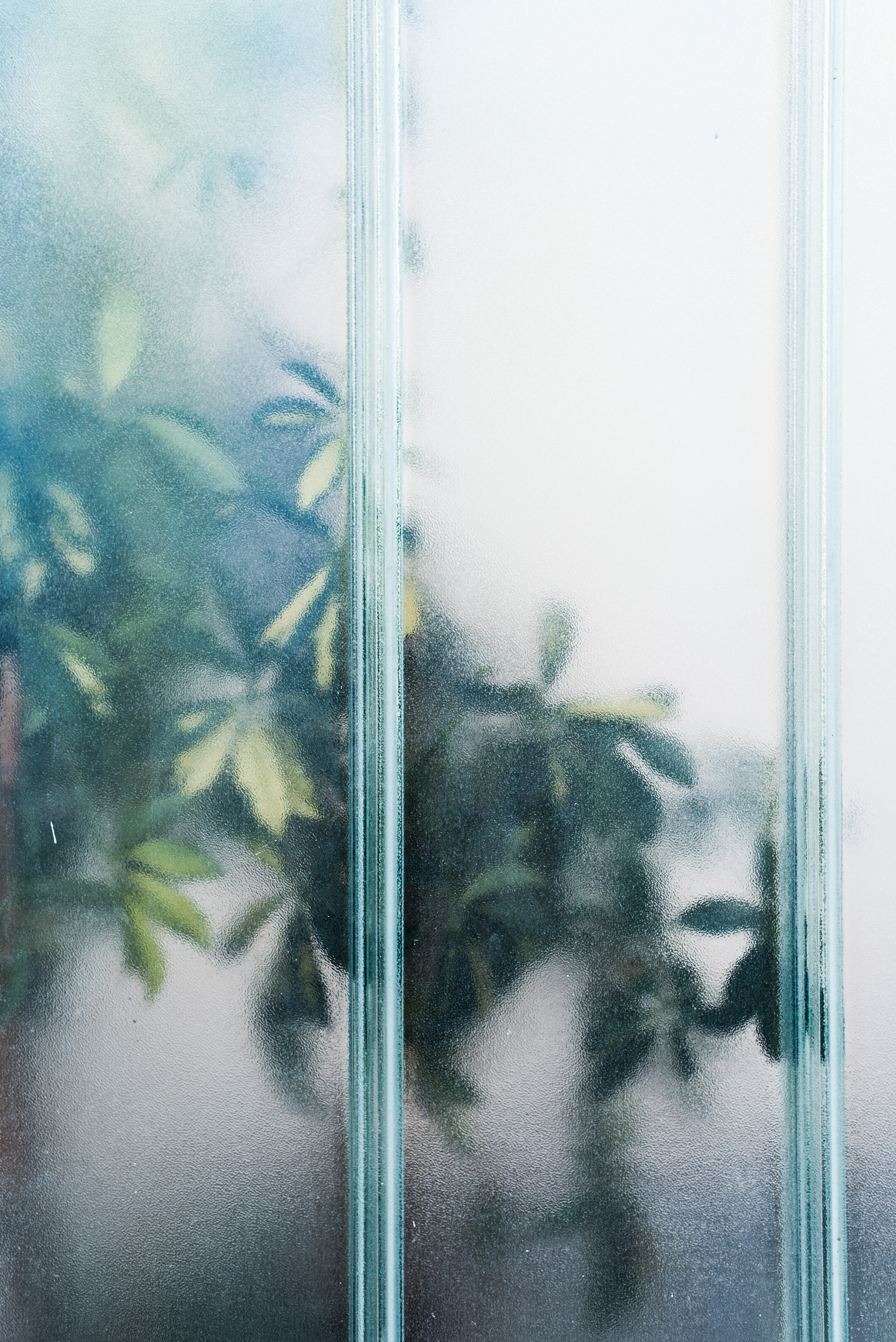 green leafed plant near glass panel