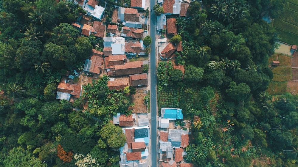 bird's eye view photo of houses near trees