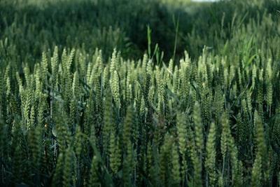 selective focus photography of amorseko grass latvia zoom background