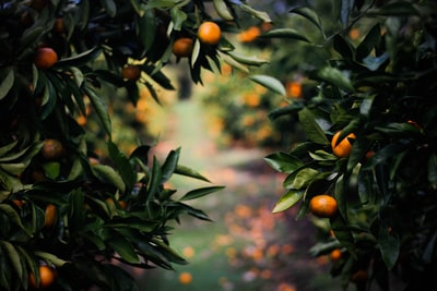 Secret Orange Garden