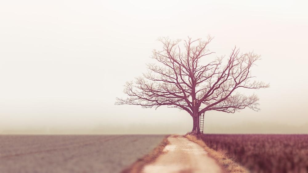 bare tree during daytime