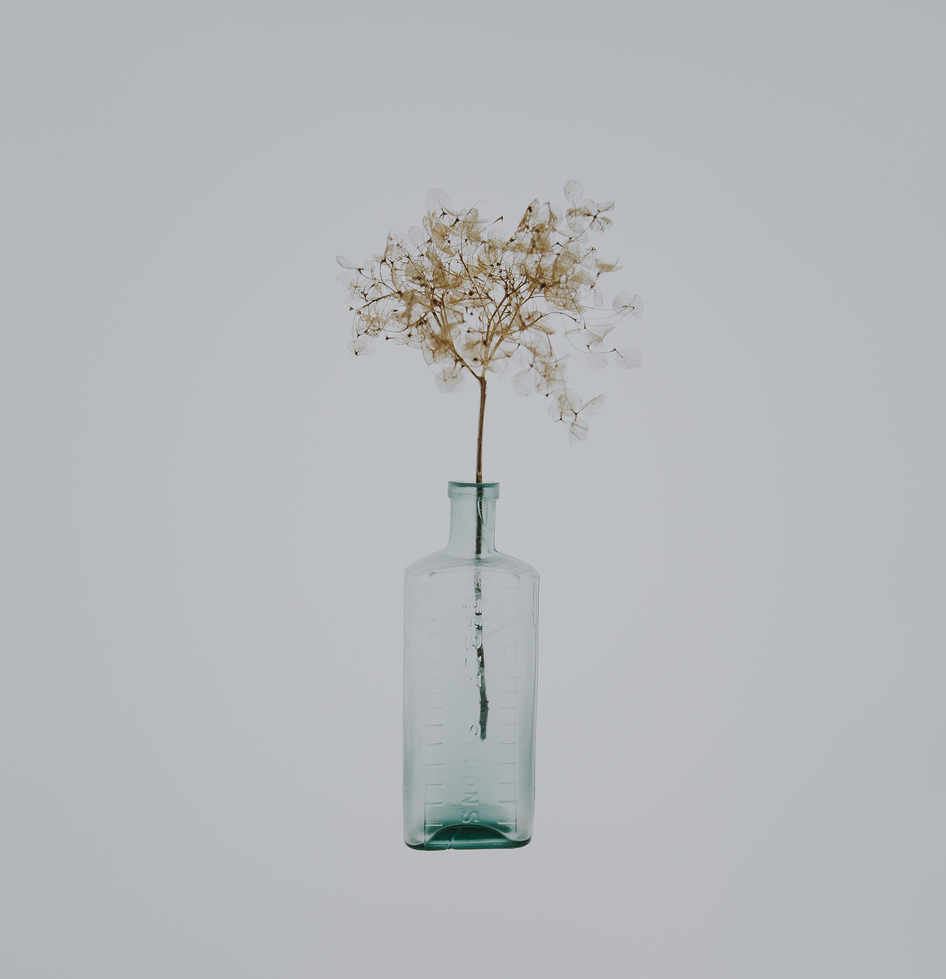 white petal flower in clear bottle on white background