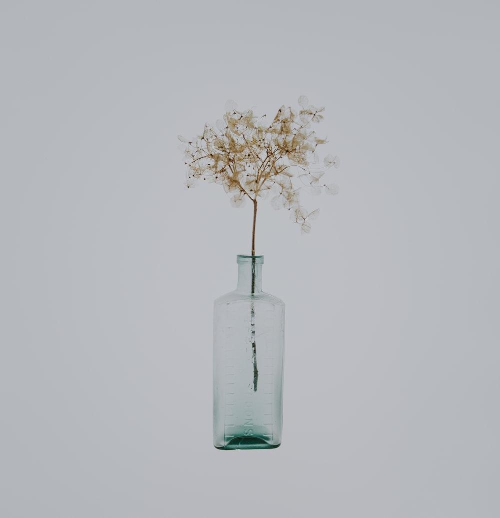 white petal flower in clear bottle on white background