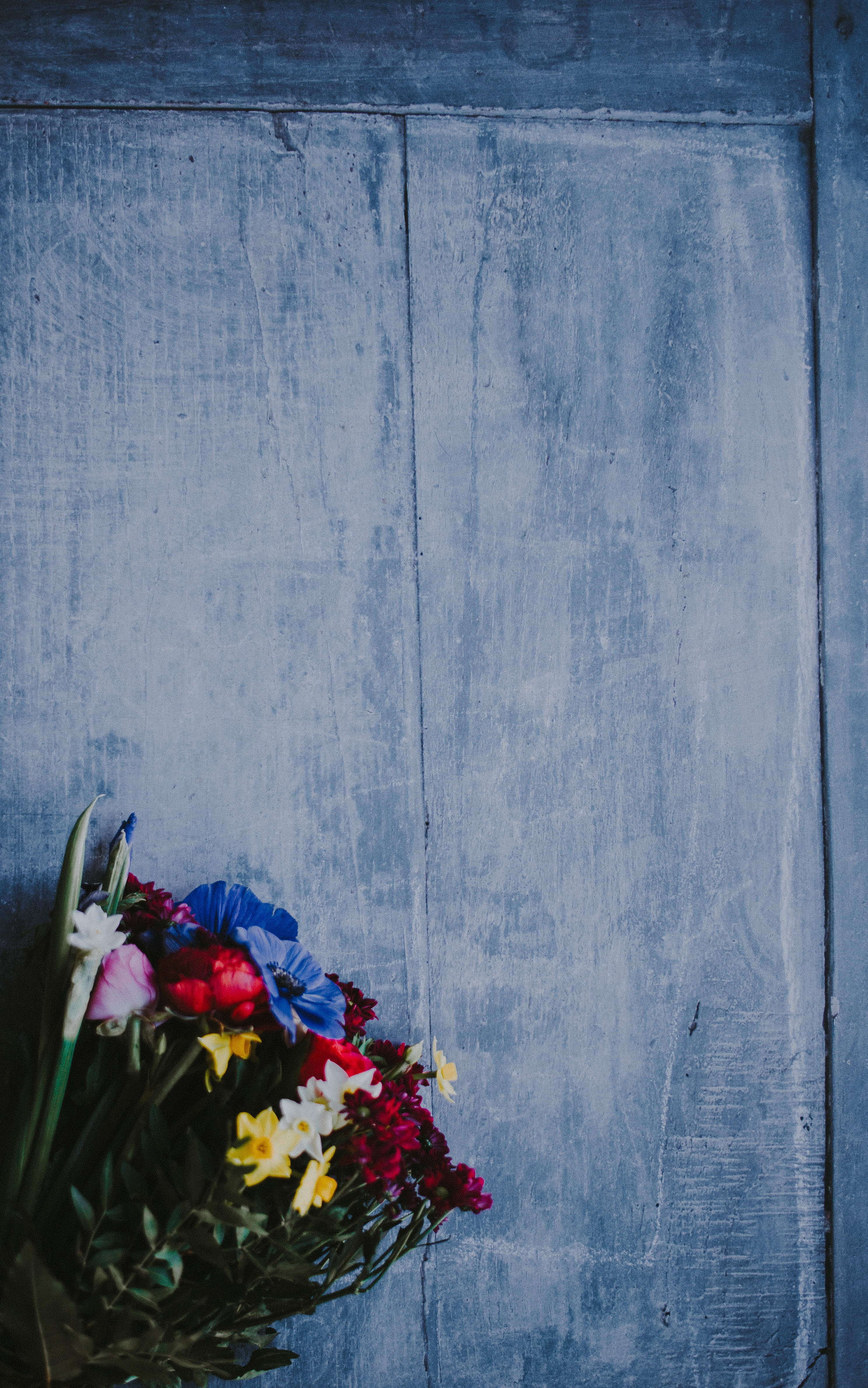 photo of blue, red, and yellow petaled flowers on top of gray board