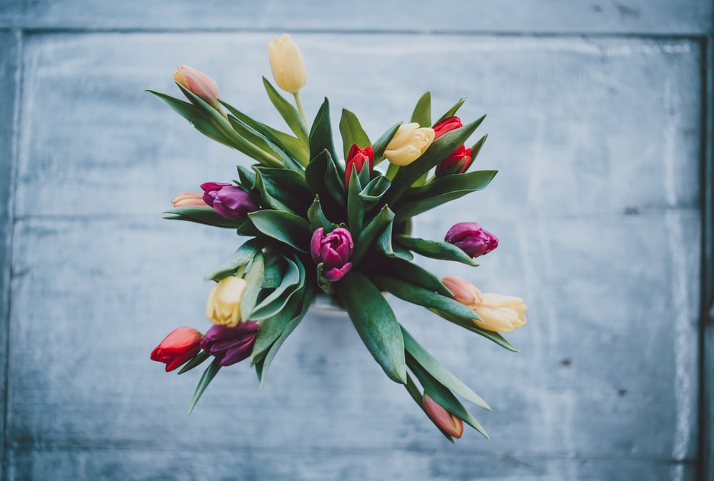 closeup photo of assorted-color tulip flowers on vase