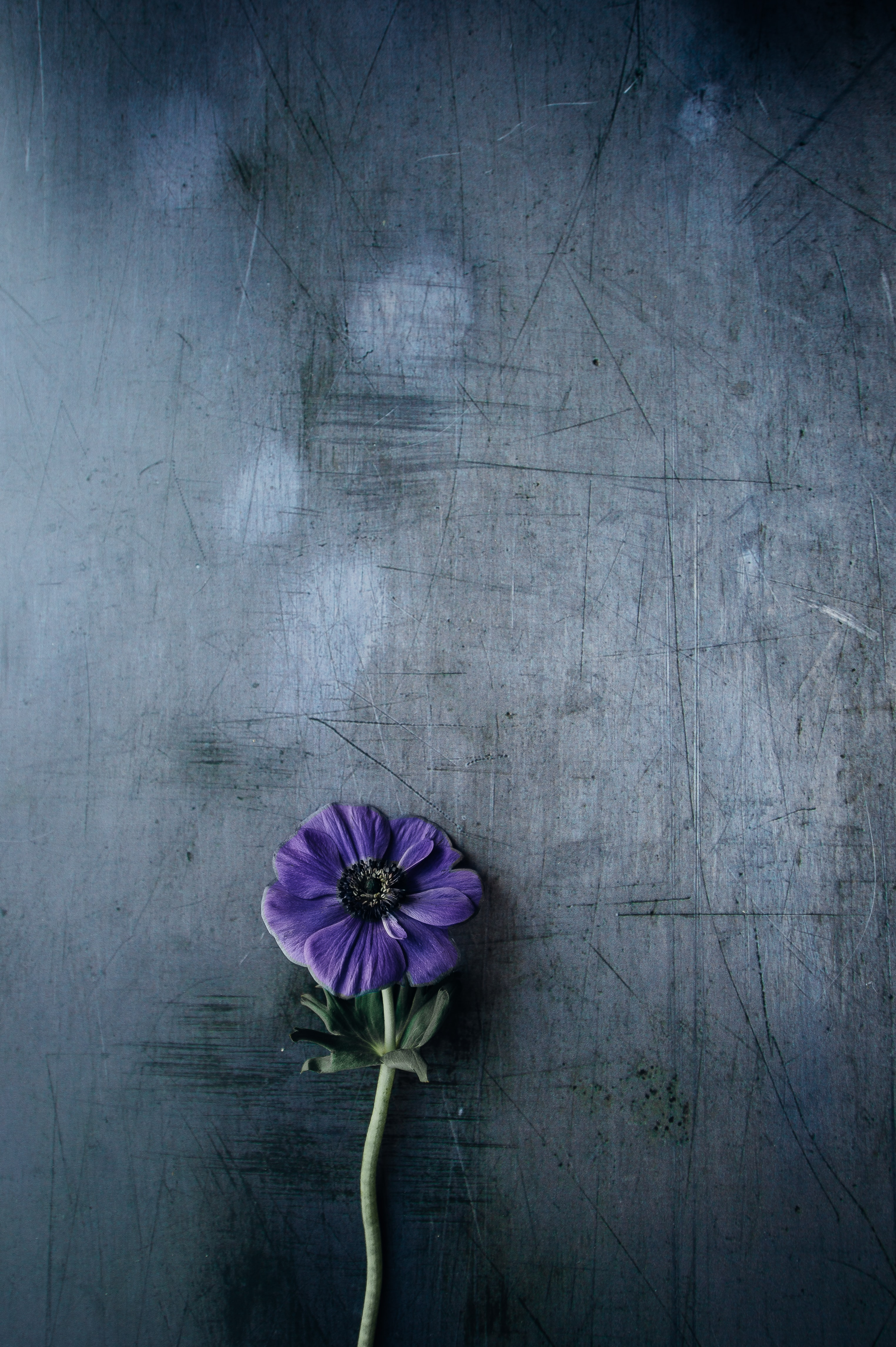 purple petaled flower on gray surface