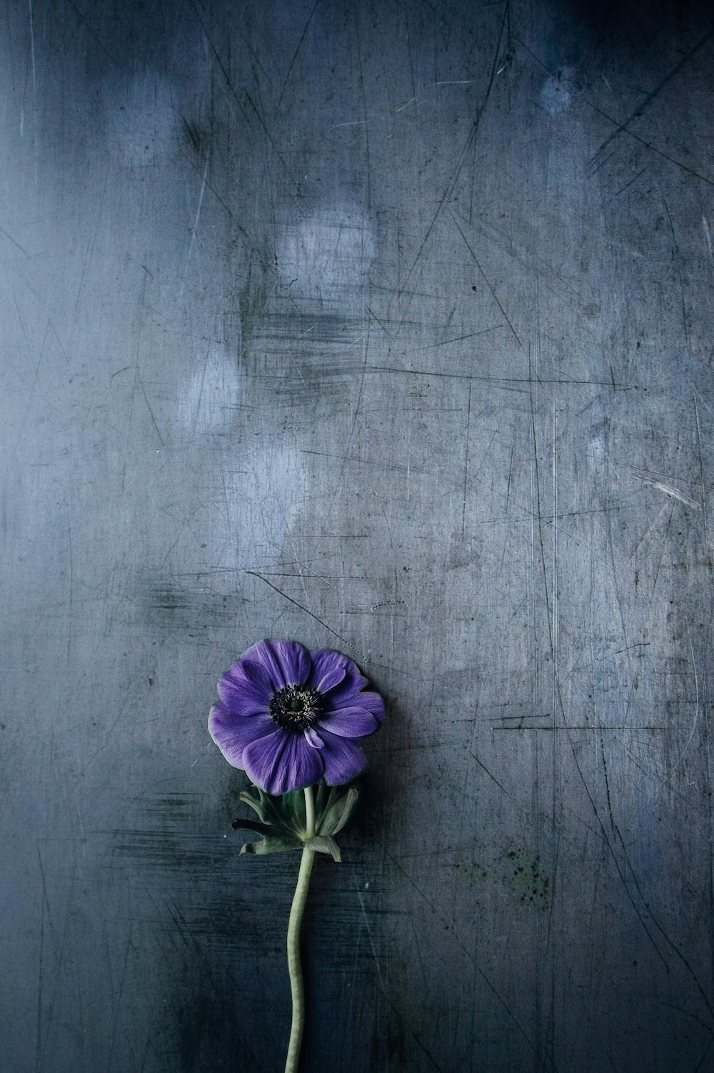 purple petaled flower on gray surface