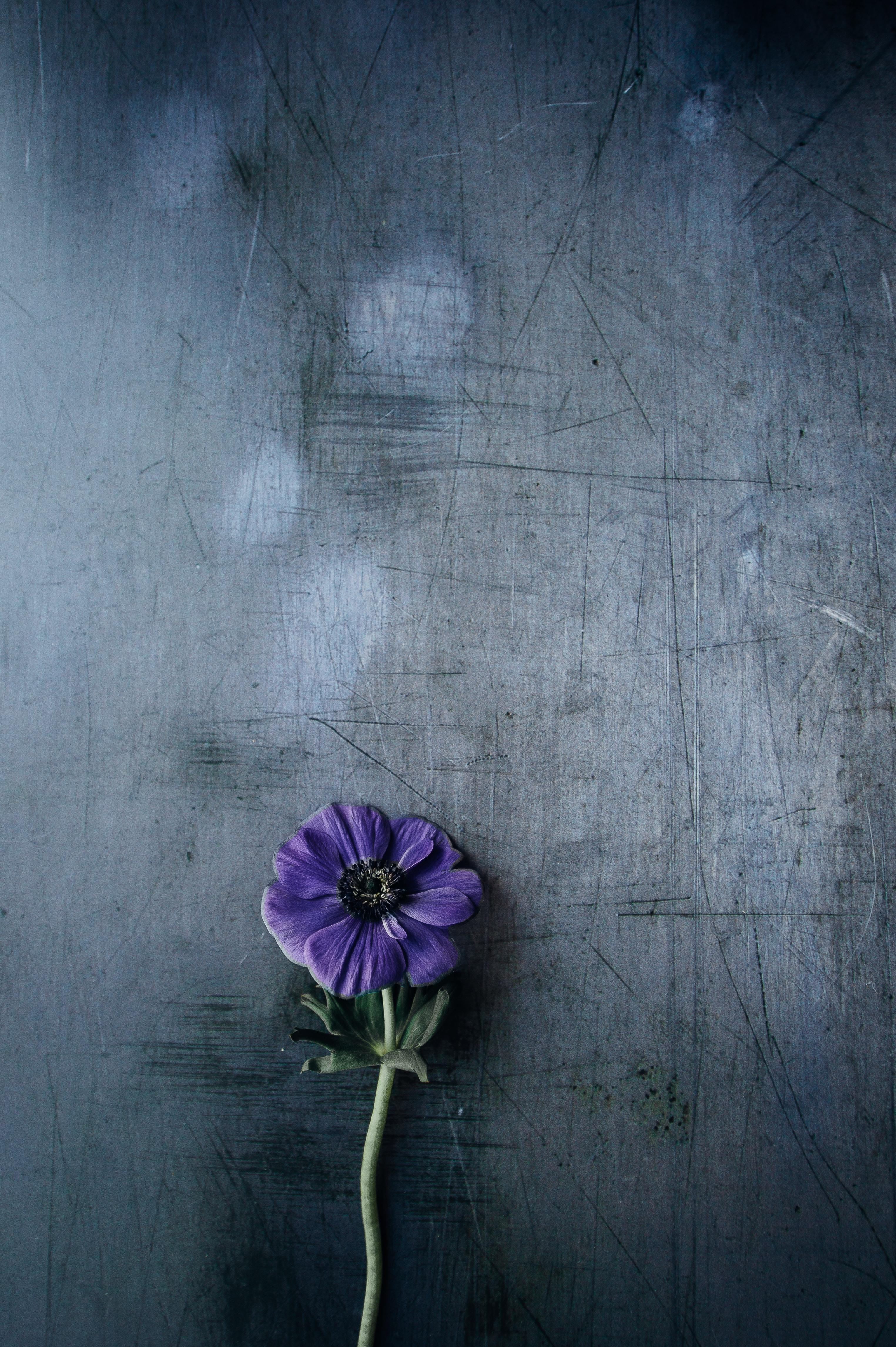 floral wallpaper photo by annie spratt   anniespratt  on