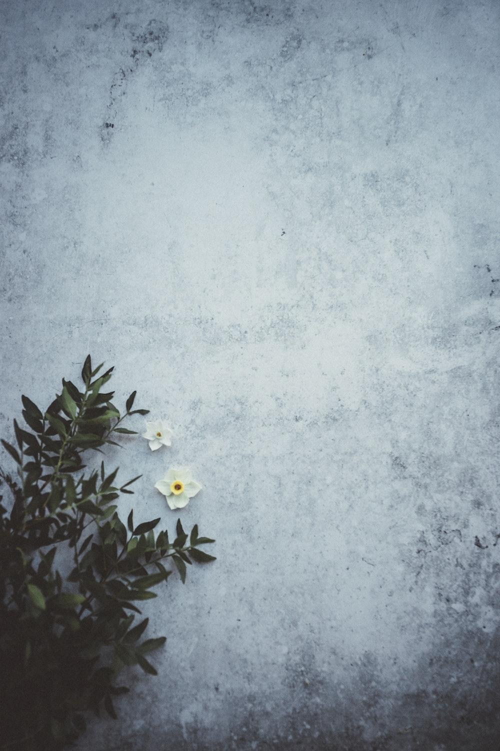 white flowers beside green leaves