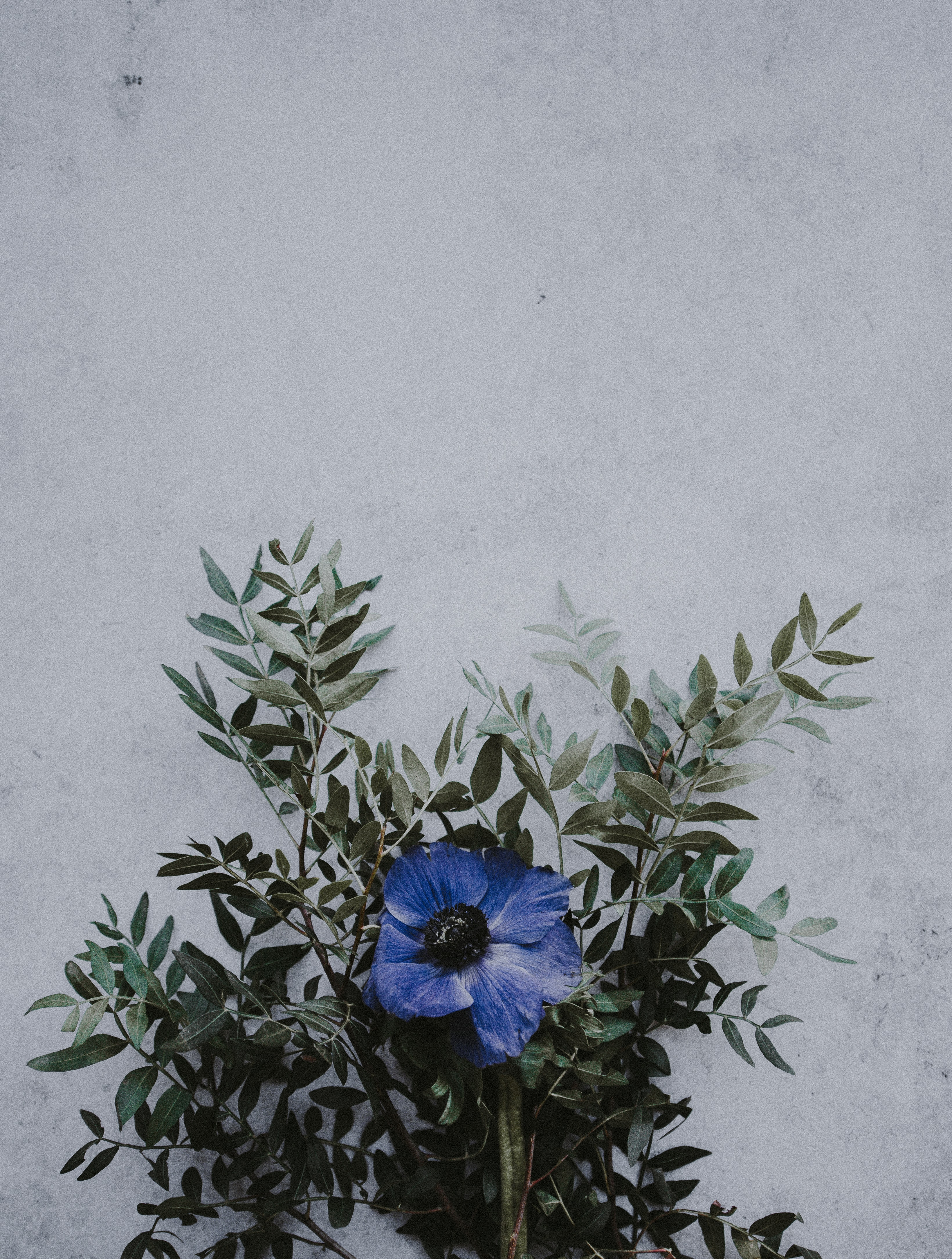 blue petaled flowers near wall