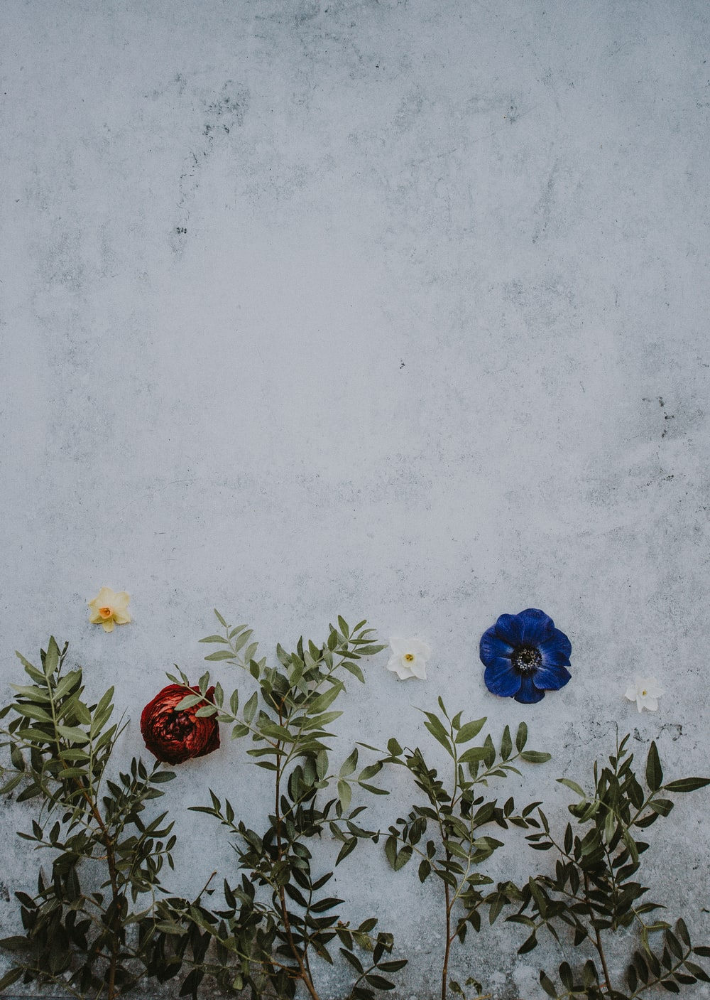 closeup photo of blue, white, and red petaled flowers