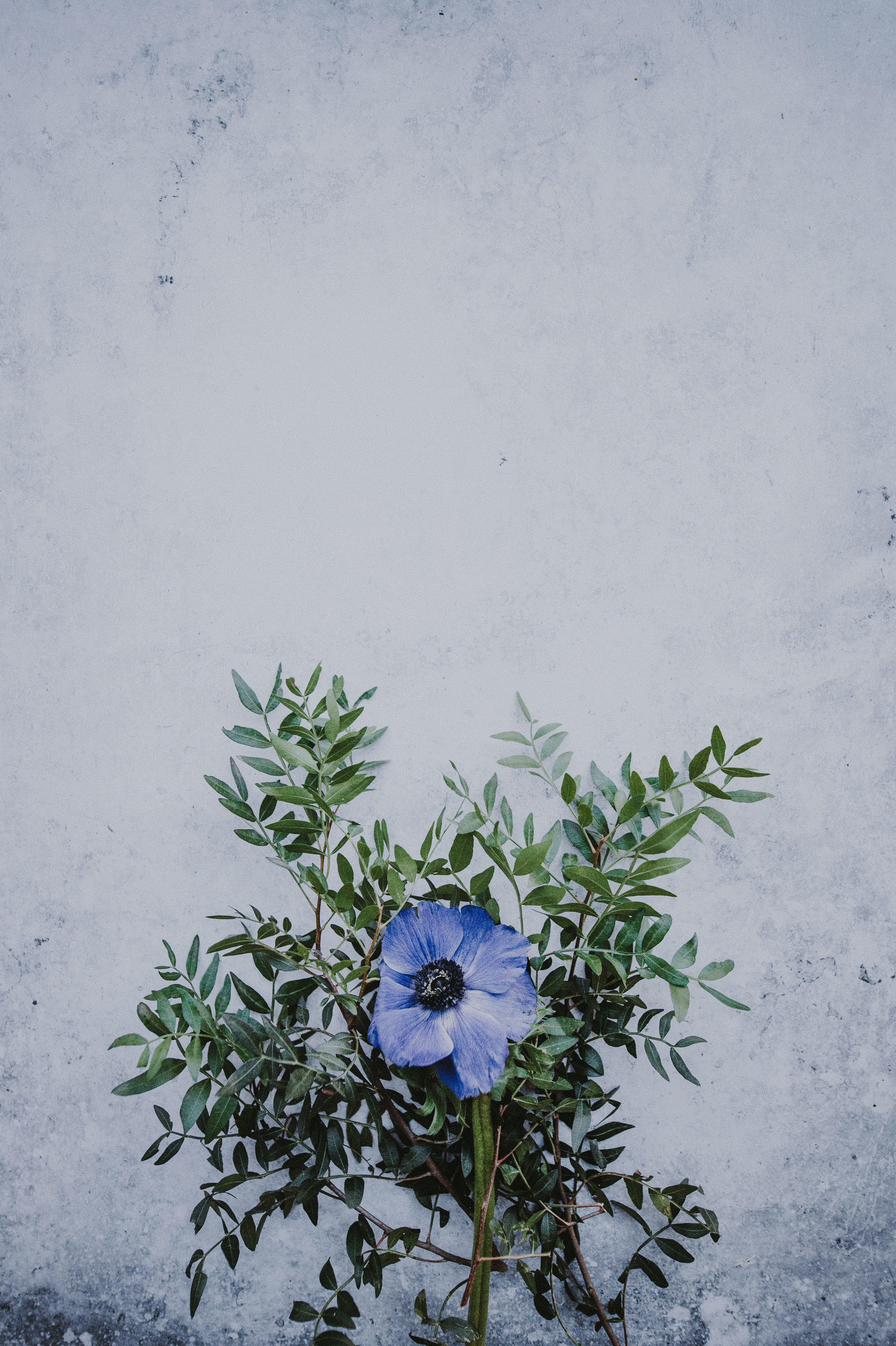 shallow focus photography of blue flower