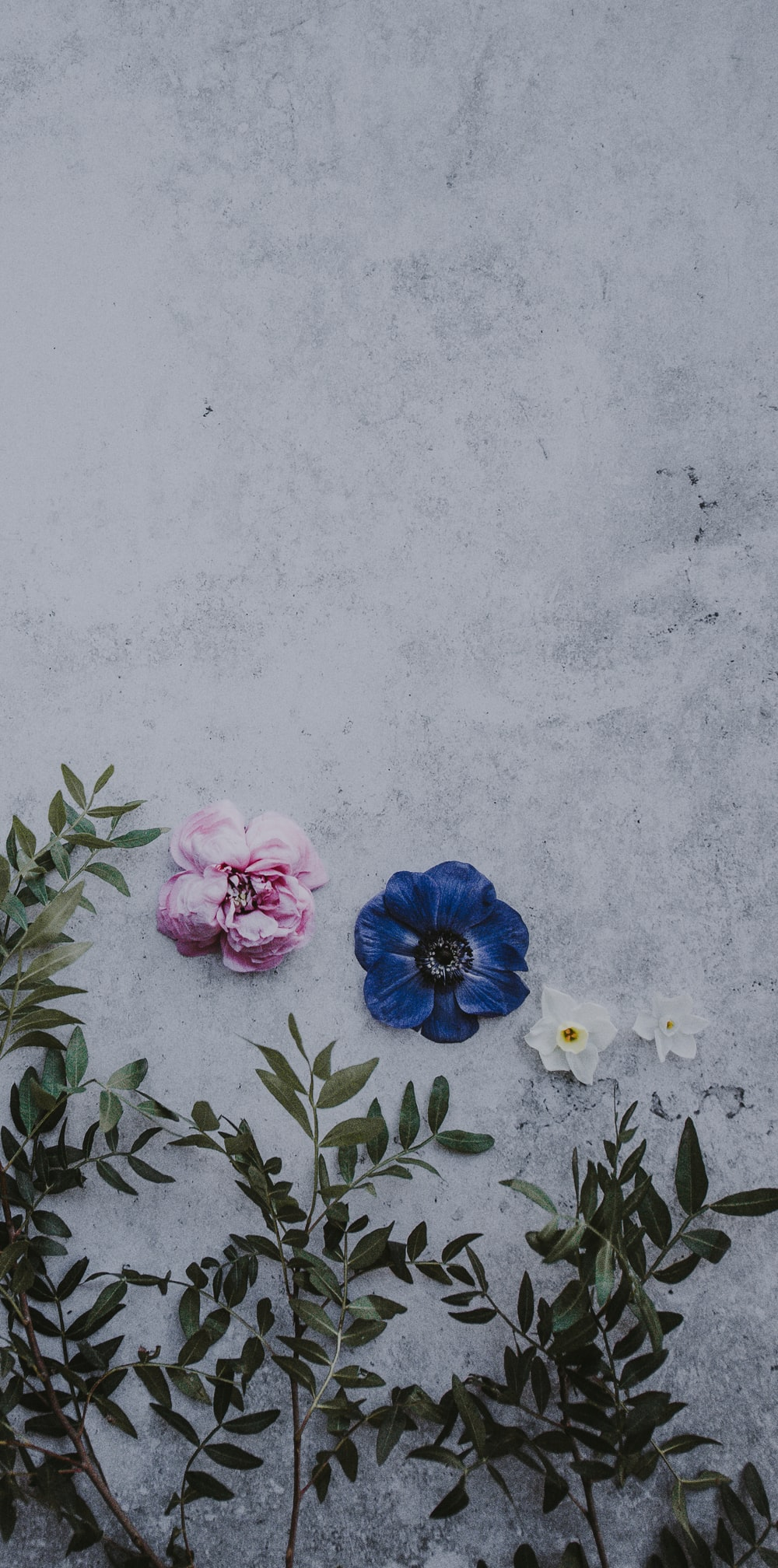 two white and pink petaled flowers on wall