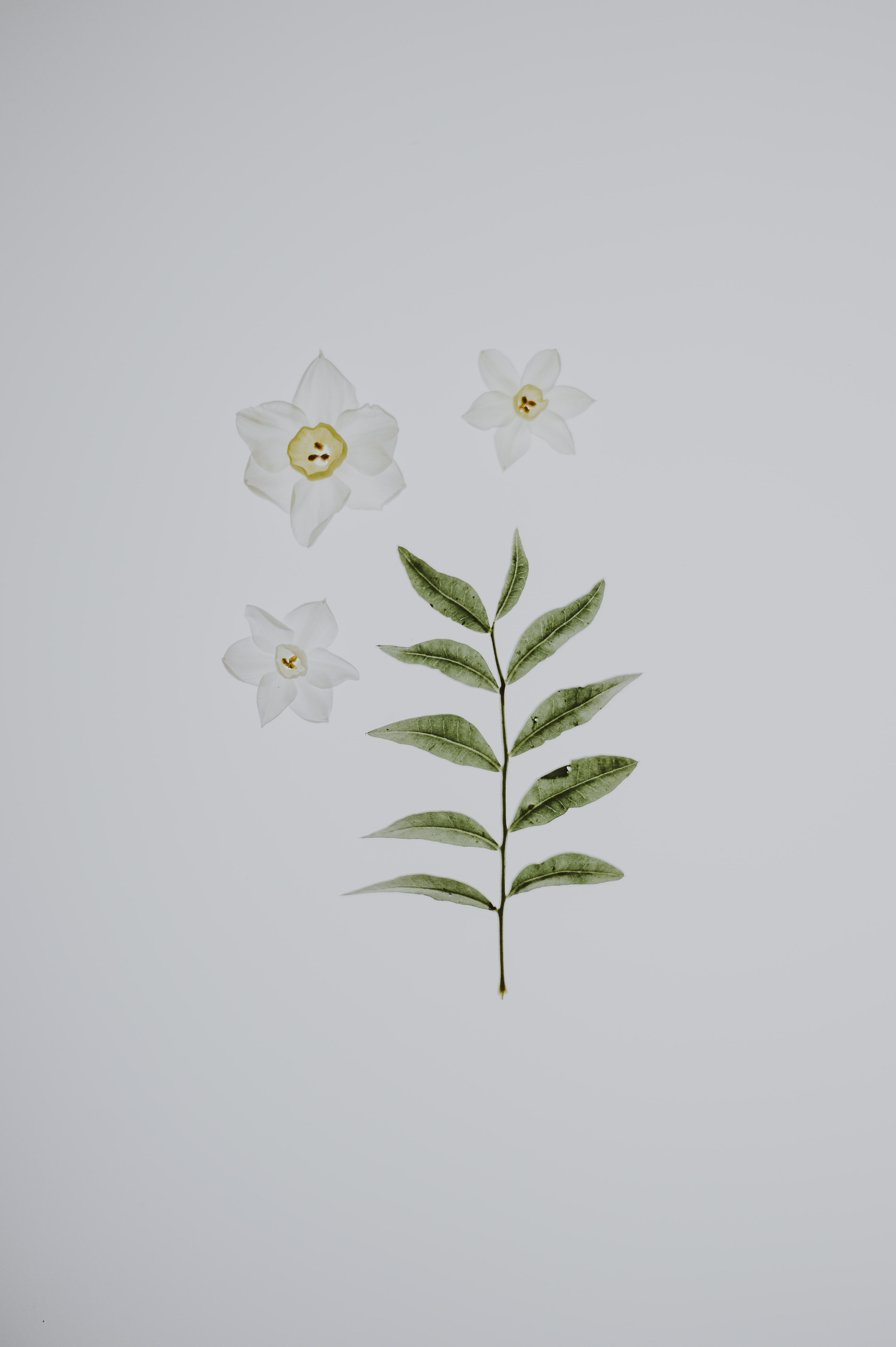 flat lay photography of white flowers and leaves