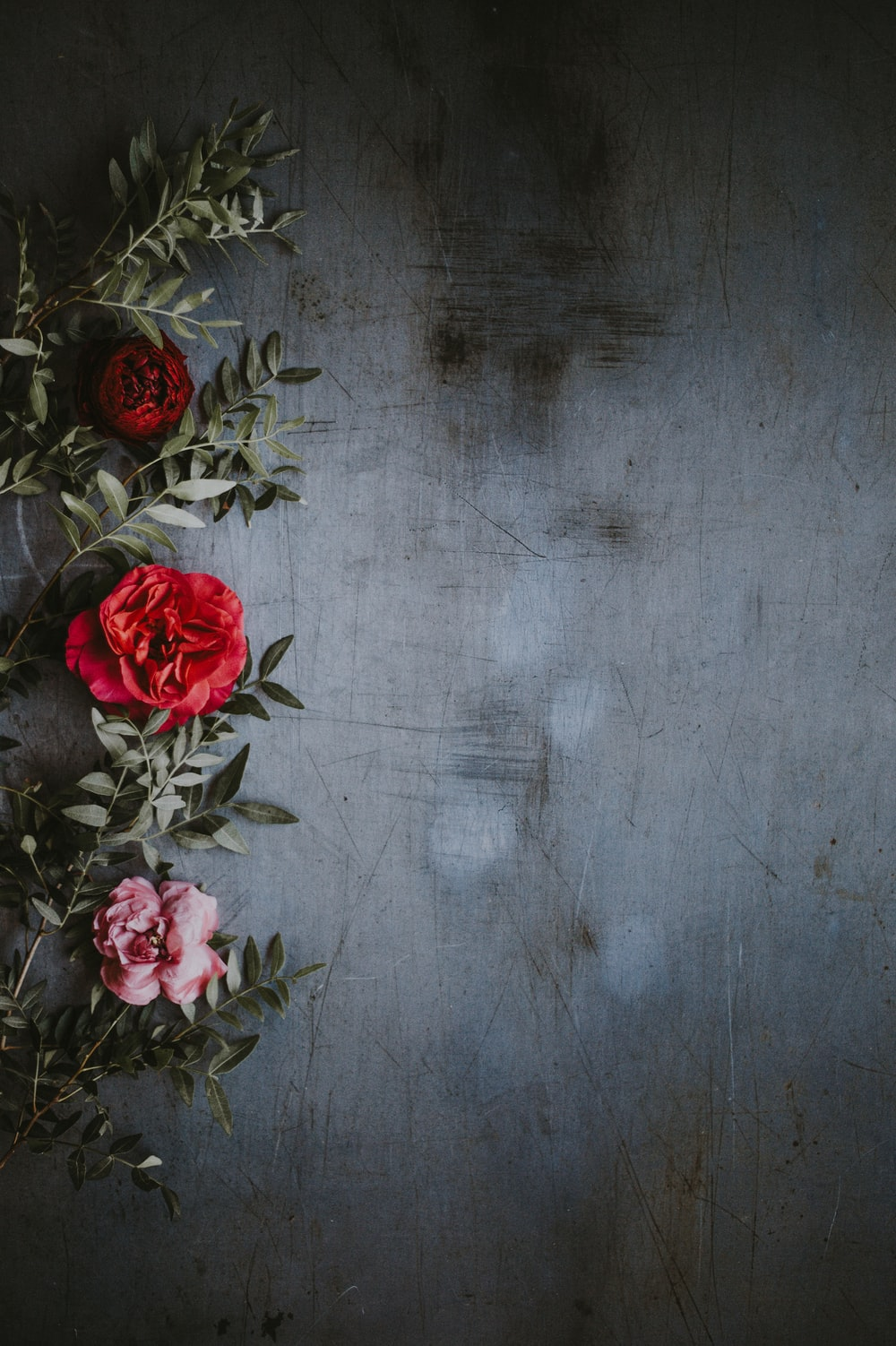 shallow focus photography of red and pink roses