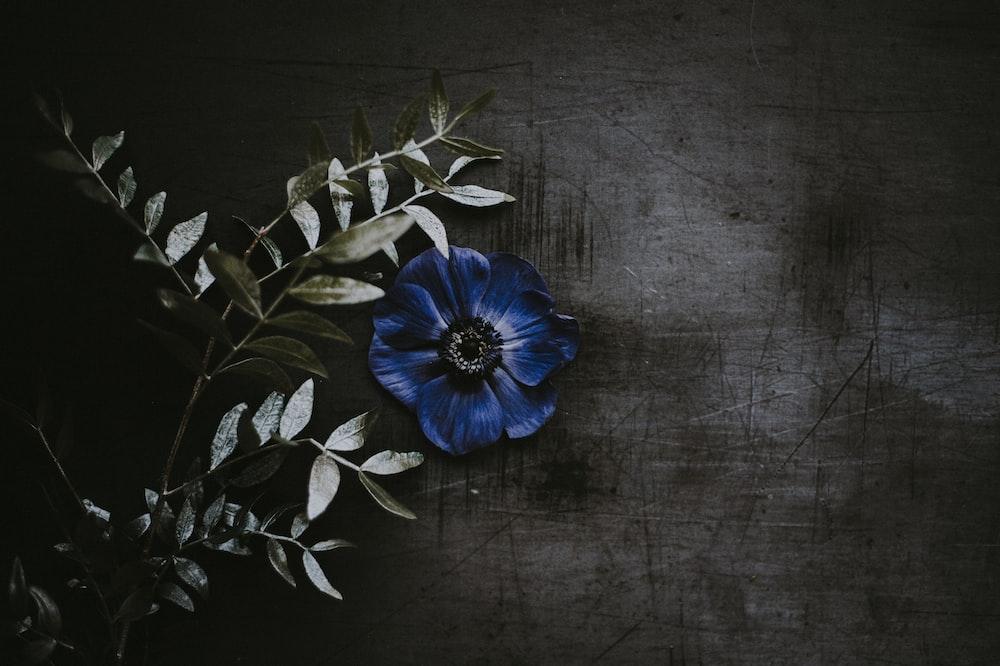 blue flower beside green leaves
