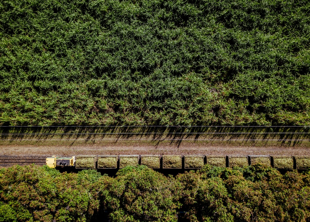aerial photo of train in middle of jungle