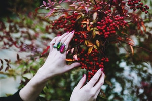 person holding red berries