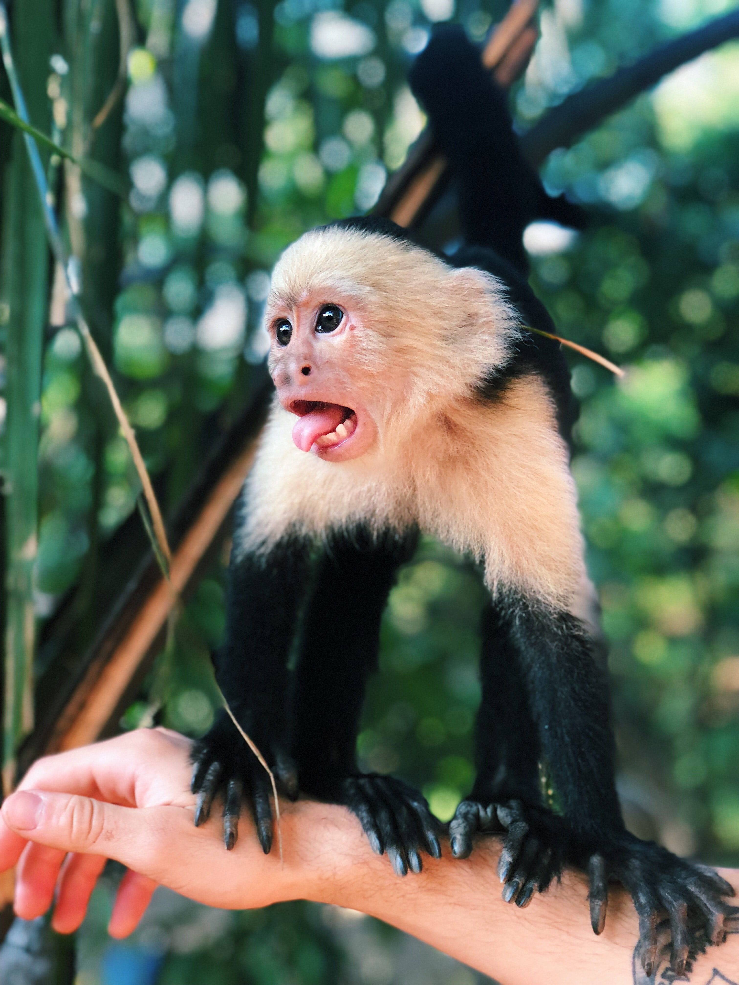 shallow focus photography of black and white monkey on person's right arm