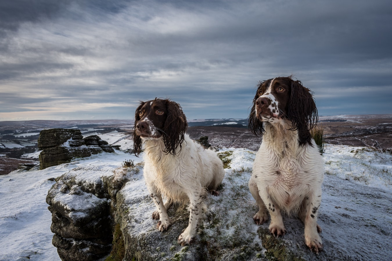 Here's Why Easy-going Cocker Spaniels Make the Perfect Family Dog