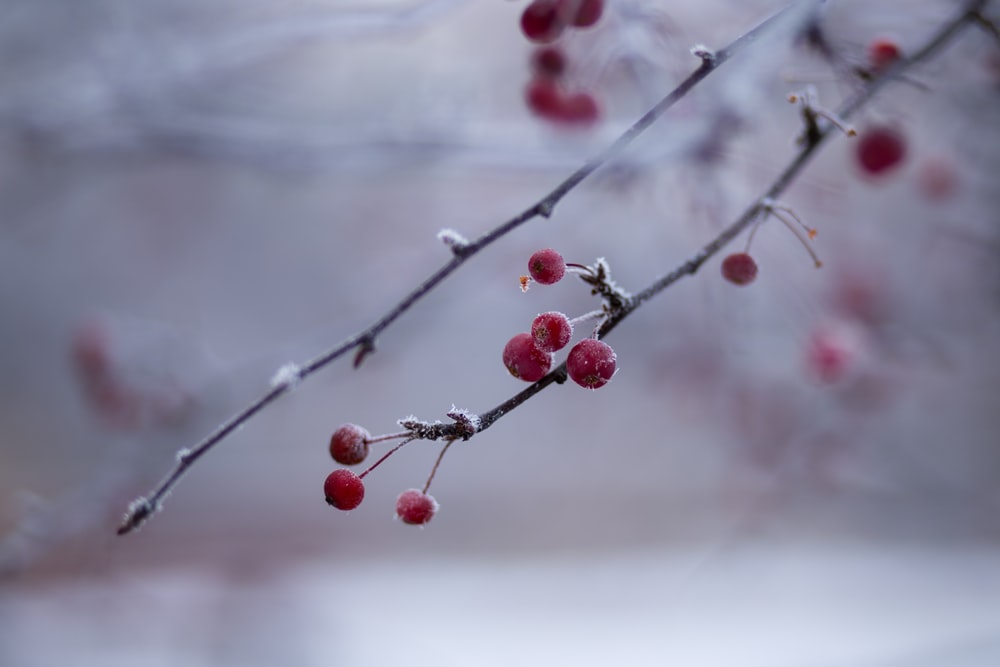 closeup photography of red buds