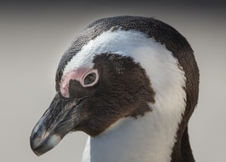 white and black animal closeup photo